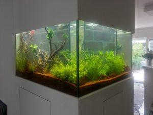 Aquarienpflege und Wartung