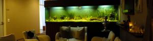 Aquarienbau