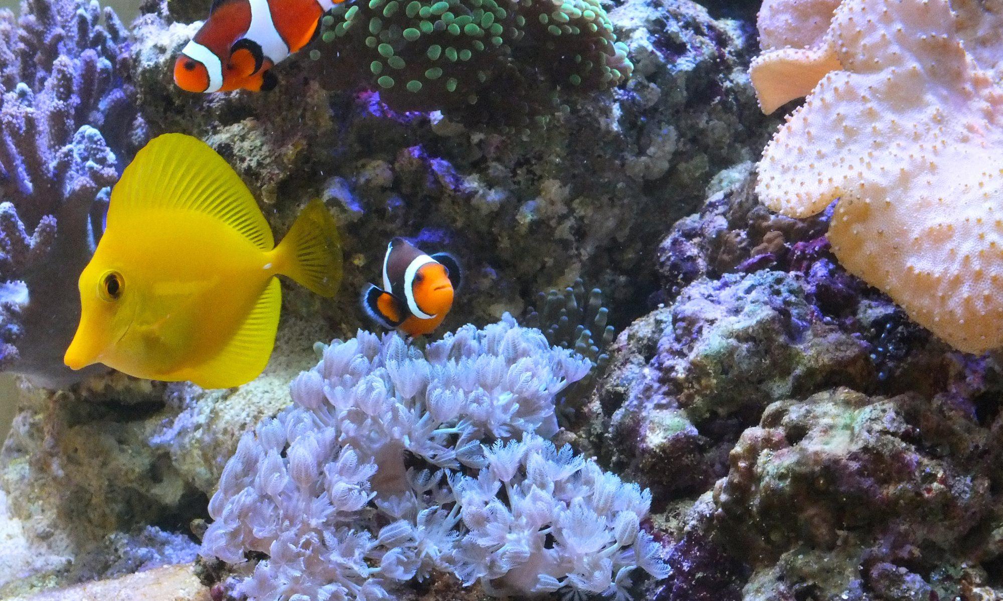 Aquarienpflege Berlin