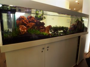 Aquascaping Art