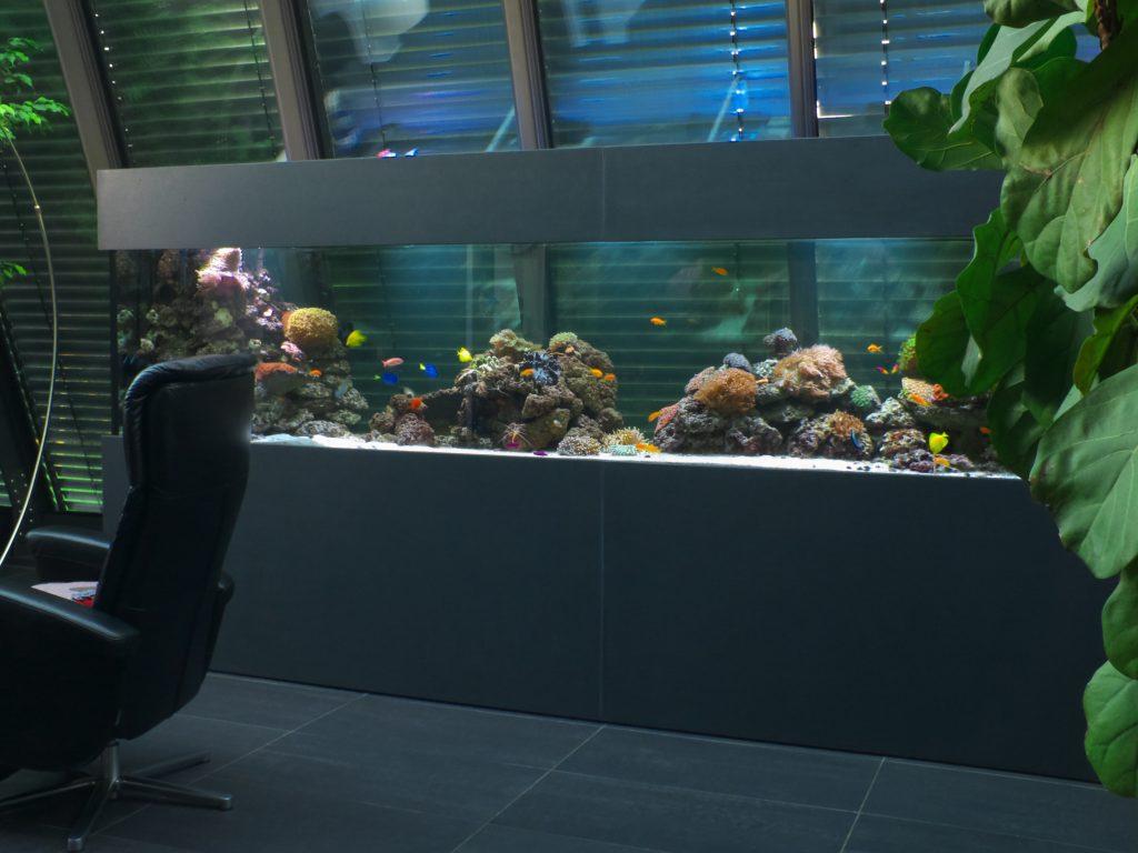Indivduelle und exklusive Meerwasseraquarien